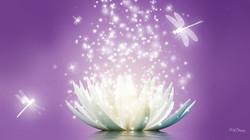 lotus essence