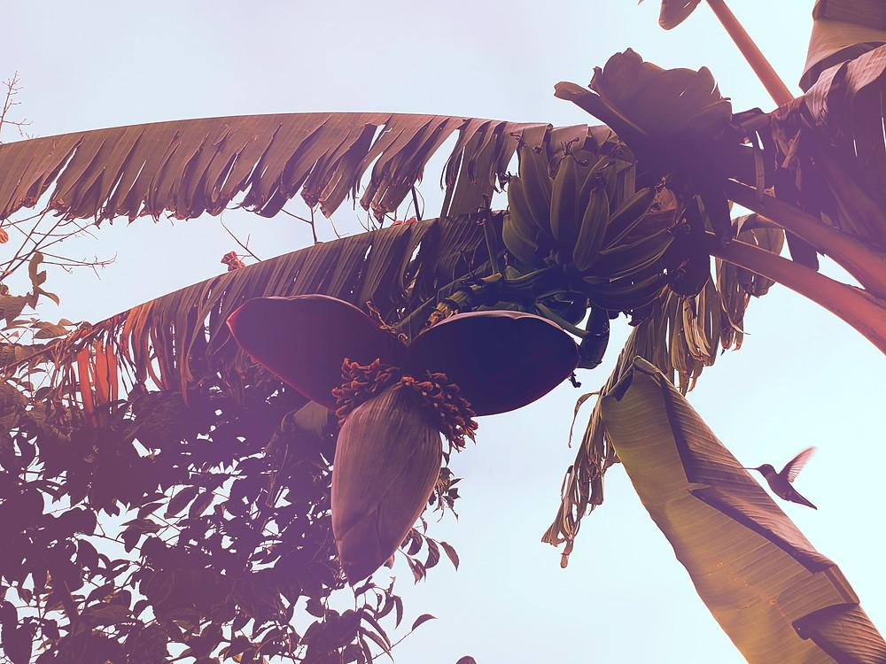 Hummingbirds in November