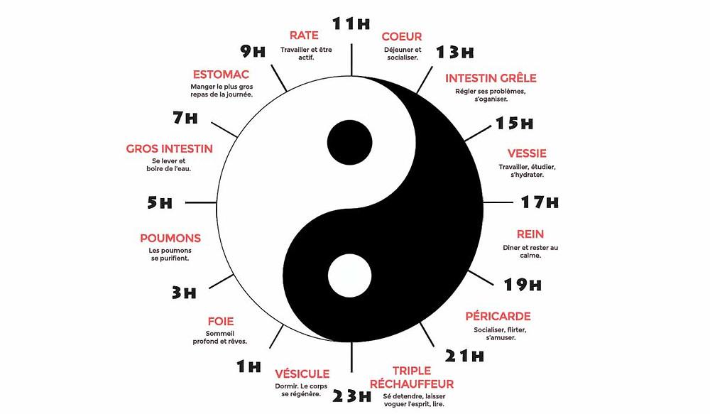 L'horloge biologique selon la médécine chinoise