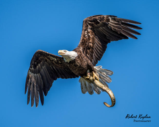 Eagles-6928.jpg