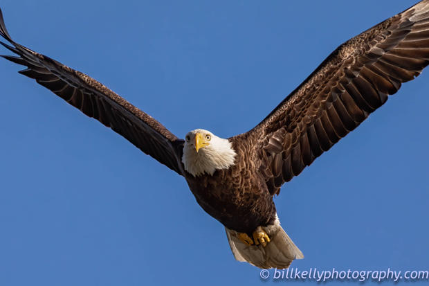 Eagle--55.jpg