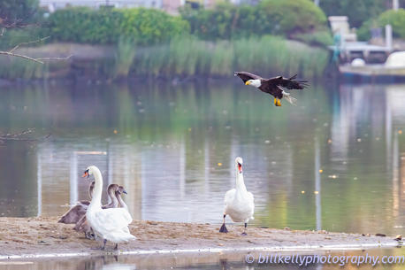 Eagle--2.jpg