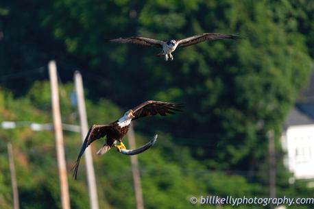eagles--67.jpg