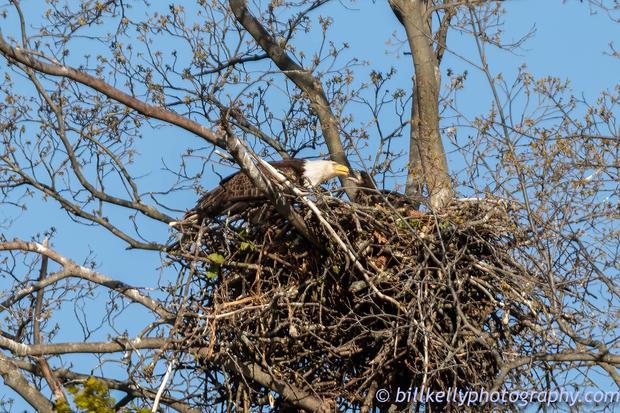 Eagles--183.jpg