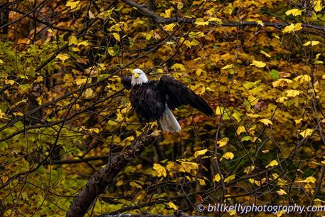 Eagles--14 2.jpg