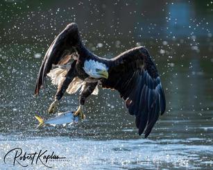 Eagle DeNoised_5566-.jpg