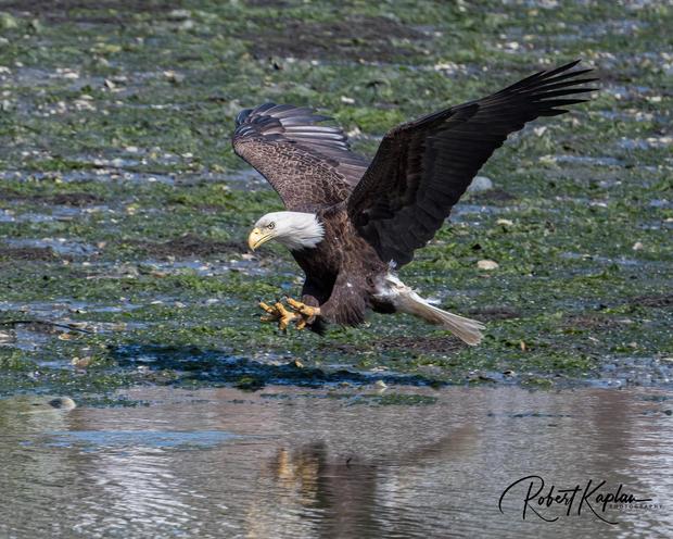 Eagle DeNoised_5626-.jpg