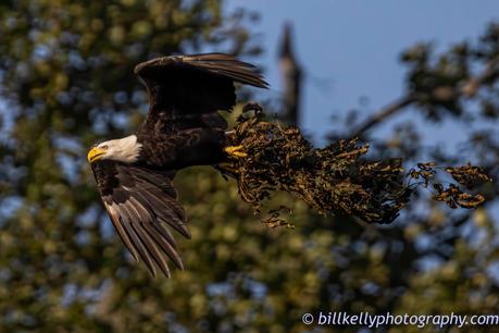 Eagles--33.jpg