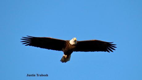 Blue Sky Eagle