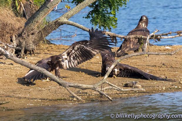 eagles--14.jpg
