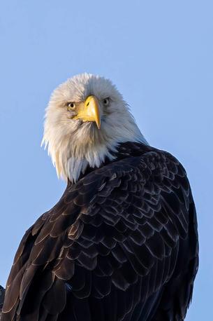 Eaglesclose--12.jpg