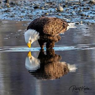 Eagle DeNoised_1861-.jpg