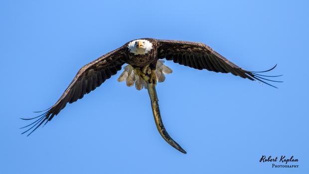 Eagles-6916.jpg