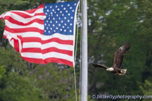 eagles--263.jpg