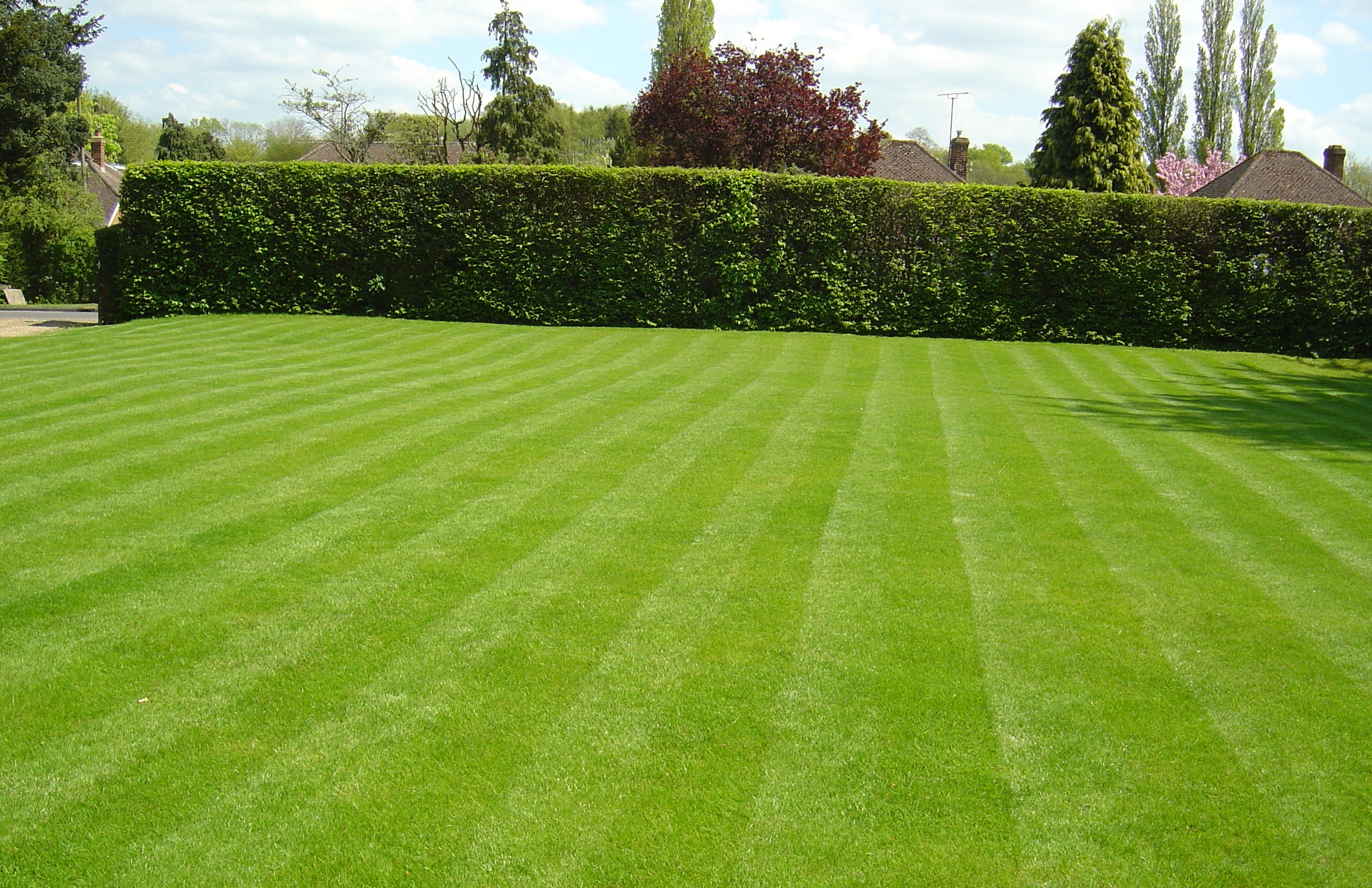 Grass Pic1.jpg