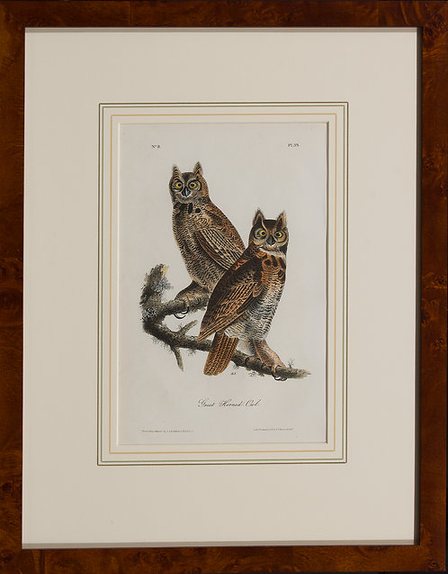 Great Horned Owl  Pl 39