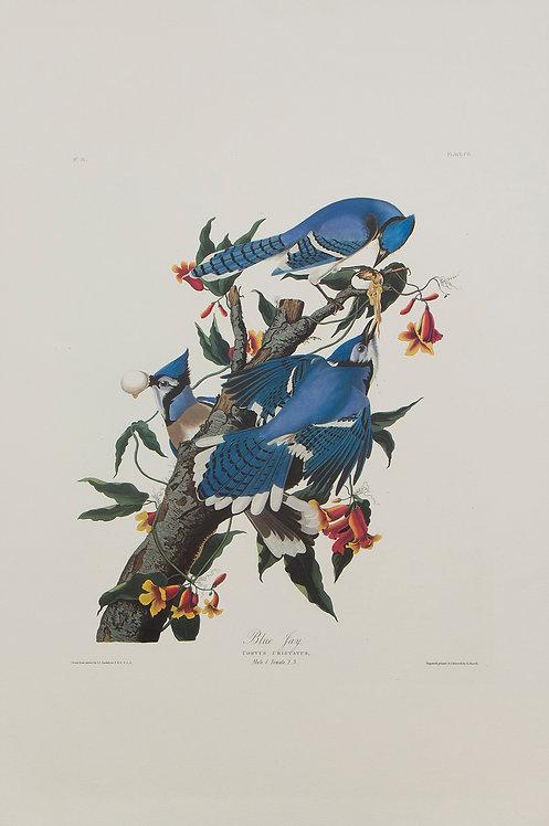 Blue Jay Pl 102