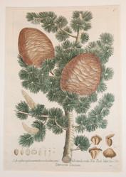 Thesaurus Rei Herbariae #2458