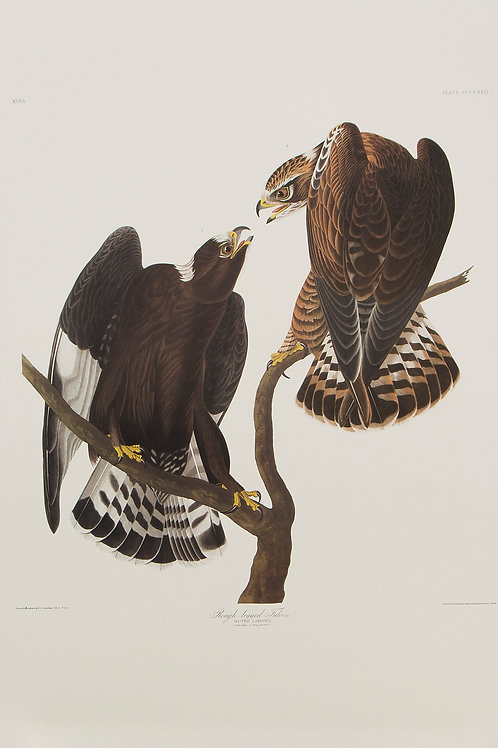 Rough-Legged Hawk Pl 422