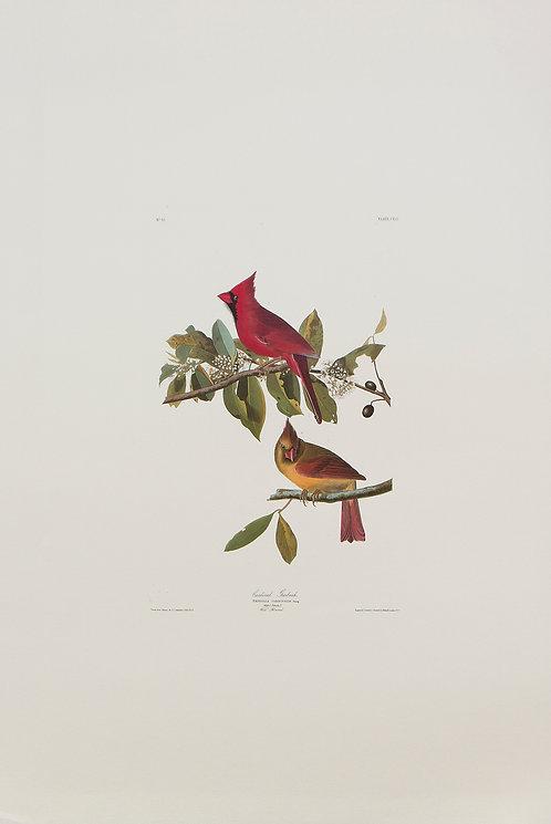 Cardinal Grosbeak Pl 159