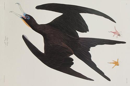Frigate Pelican Pl 271