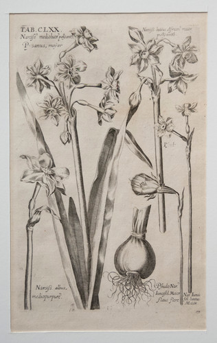 Viridarium Reformantium #2454