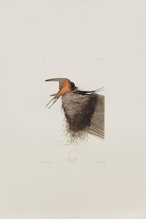 Barn Swallow Pl 173