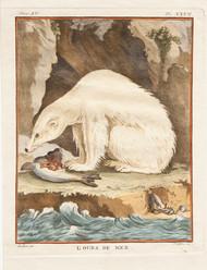 L'ours de Mer