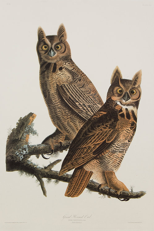 Great Horned Owl Pl 61