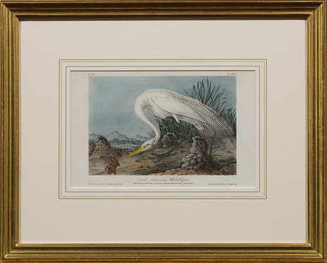 Great American White Egret