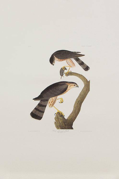 Chickadees and Bush-Tit Pl 353