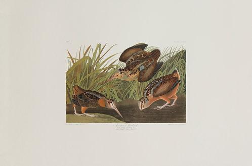 American Woodcock Pl 268