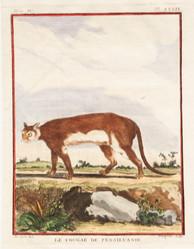 Le Cougar de Pensilvanie