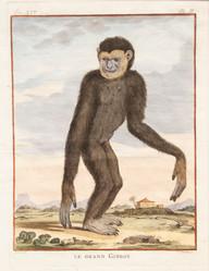 Le Grand Gibbon