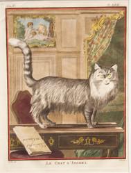Le Chat D'Angora
