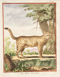 Le Chat Sauvage
