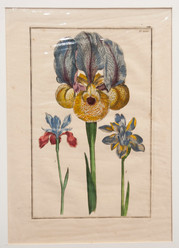 Theatrum Florge