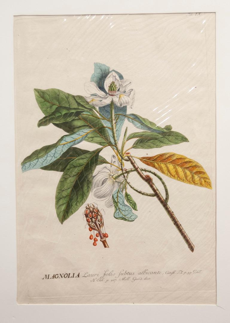 Plantae Selectae