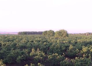 Governo do Mato Grosso do Sul busca fortalecer a cultura do urucum no Estado.