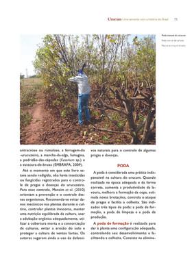 Poda manual do urucum - Autor: Roberto Hissao Arakaki