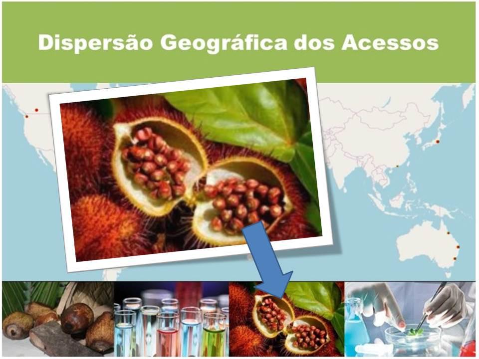 Imagem de uma cachopa com sementes de urucum na página do SisGen - Sistema Nacional de Gestão do Patrimônio Genético e do Conhecimento Tradicional Associado.