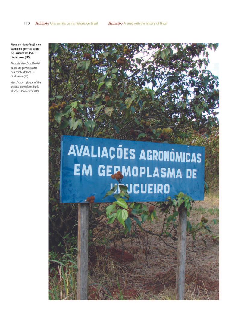 Placa de identificação do Banco de germolasma de urucum do IAC localizado em Pindorama - SP - BR - Acervo particular do autor