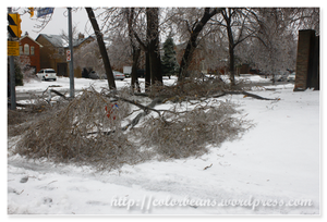 樹枝太重的結果就是斷掉了 :(