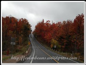 週邊道路的楓葉都變色摟~,很漂亮說