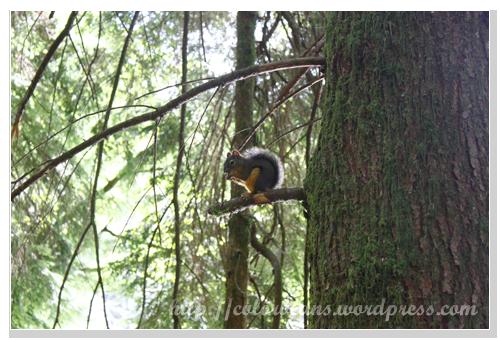 可愛的小松鼠正在吃大餐