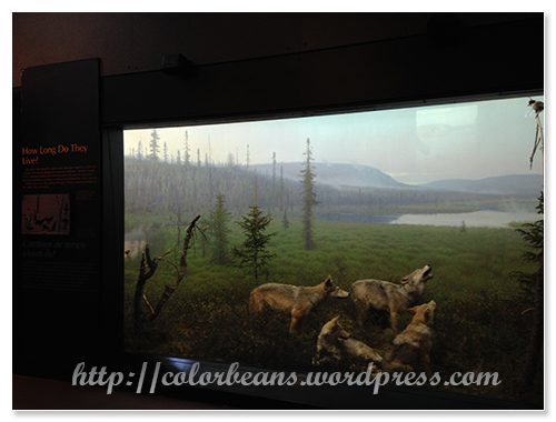 展館內的生態介紹
