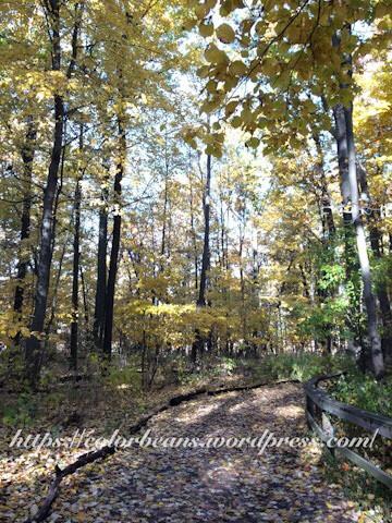 步道的邊線是枯木用圍起