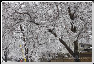 所有樹枝都結冰了~~