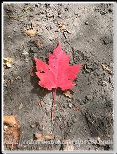 有些樹葉已經變色摟