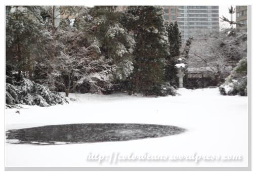 Kariya Park的池塘都結冰了